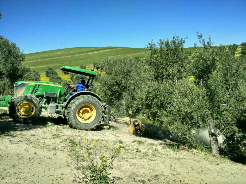 tractor en olivos cubierta vegetal